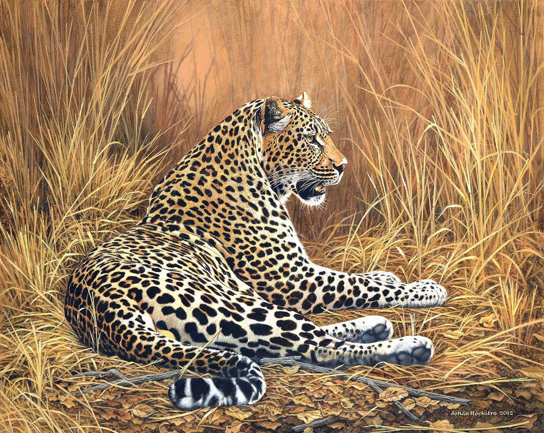 Leopard Art Work Johan Hoekstra Wildlife - Prints