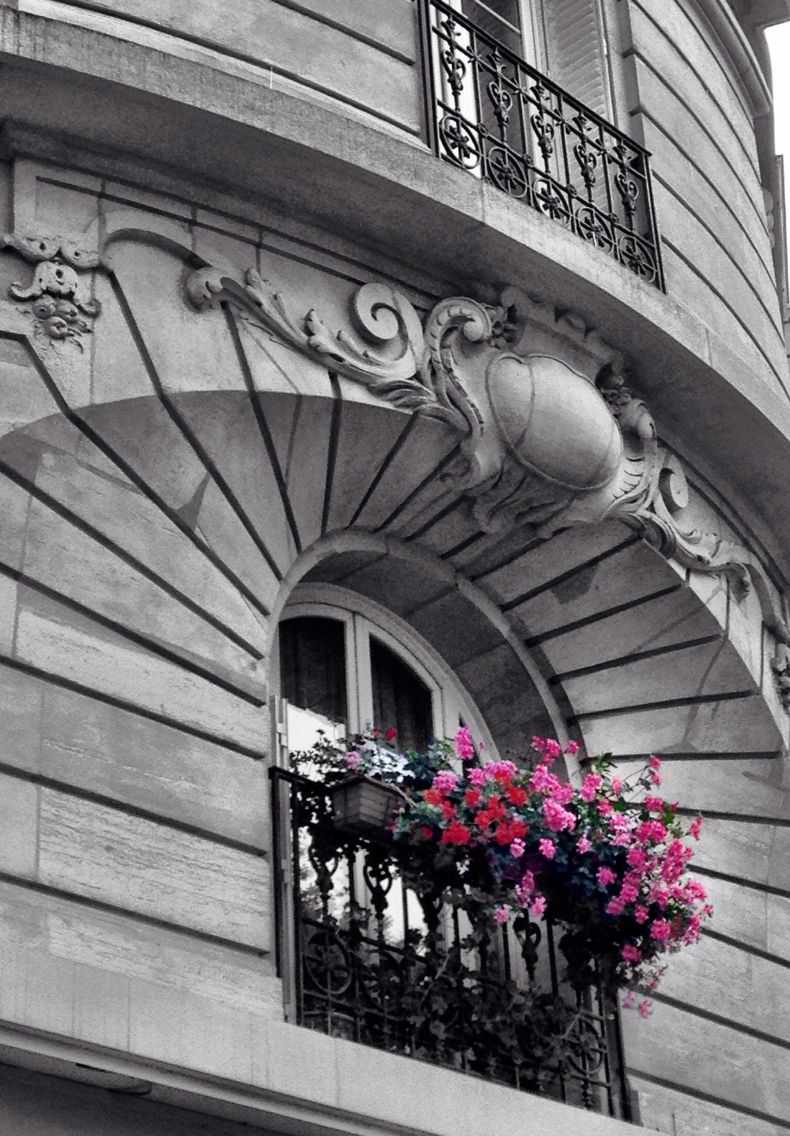 Black white photography beautiful architecture with with colorized pink red flowers in the window boxes paris france