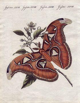 George Glazer Gallery - Antique Prints, Natural History - Four Bertuch Butterflies