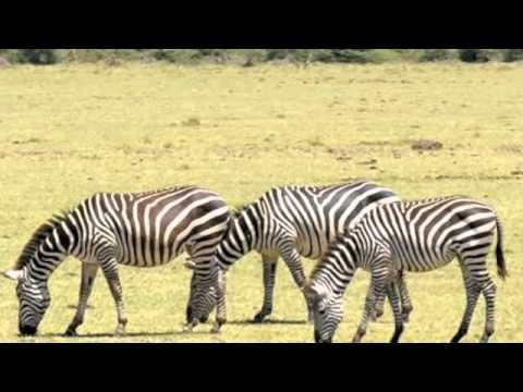 Cycle 2 Week 2  Carnivore, Herbivore and Omnivore - YouTube