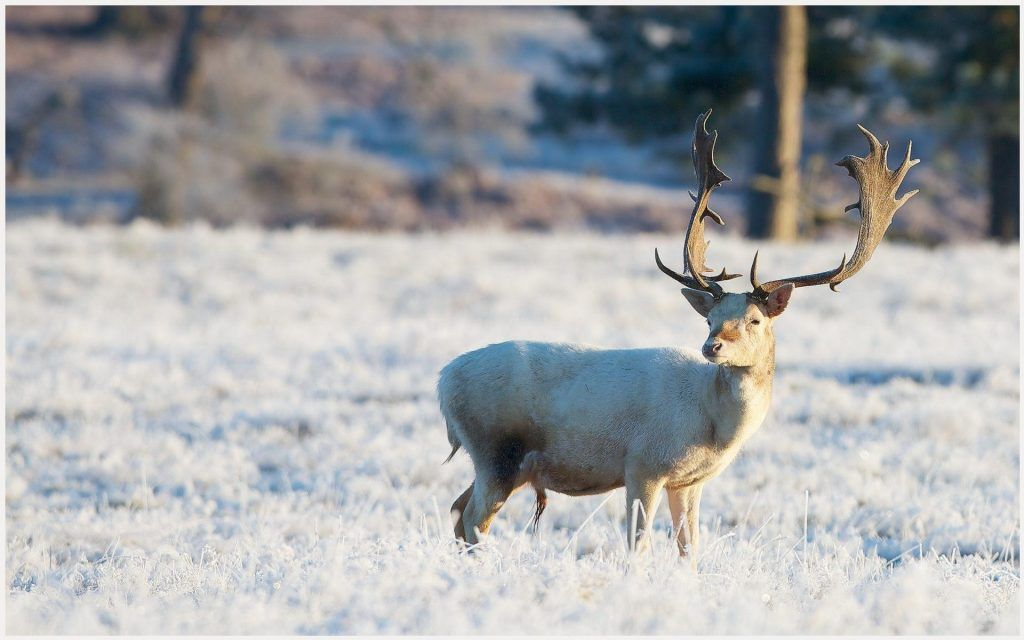 White deer wallpaper black and white deer wallpaper white deer white deer wallpaper black and white deer wallpaper white deer hd wallpapers white voltagebd Image collections