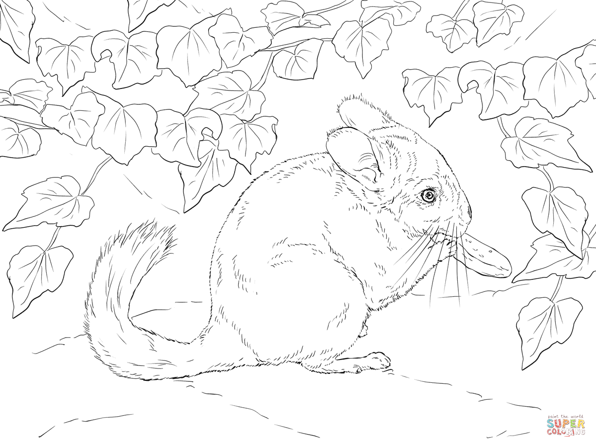 Wonderful Long Tailed Chinchilla Coloring Page | Free Printable Coloring Pages