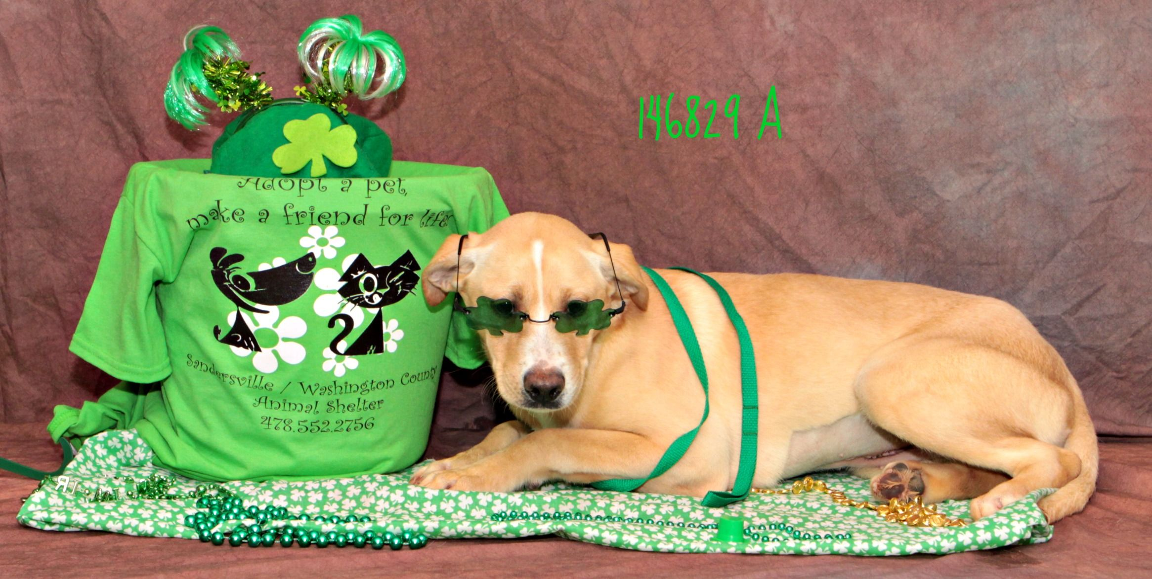 Emerald ADOPT ME TODAY! FOR MORE INFORMATION PLEASE VISIT