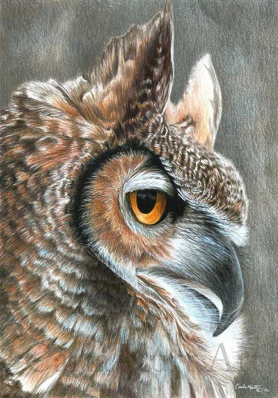 Owl Art Original Drawing By Carla Kurt Pencil Drawings Of Animals, Owl  Art Print, Owls Drawing