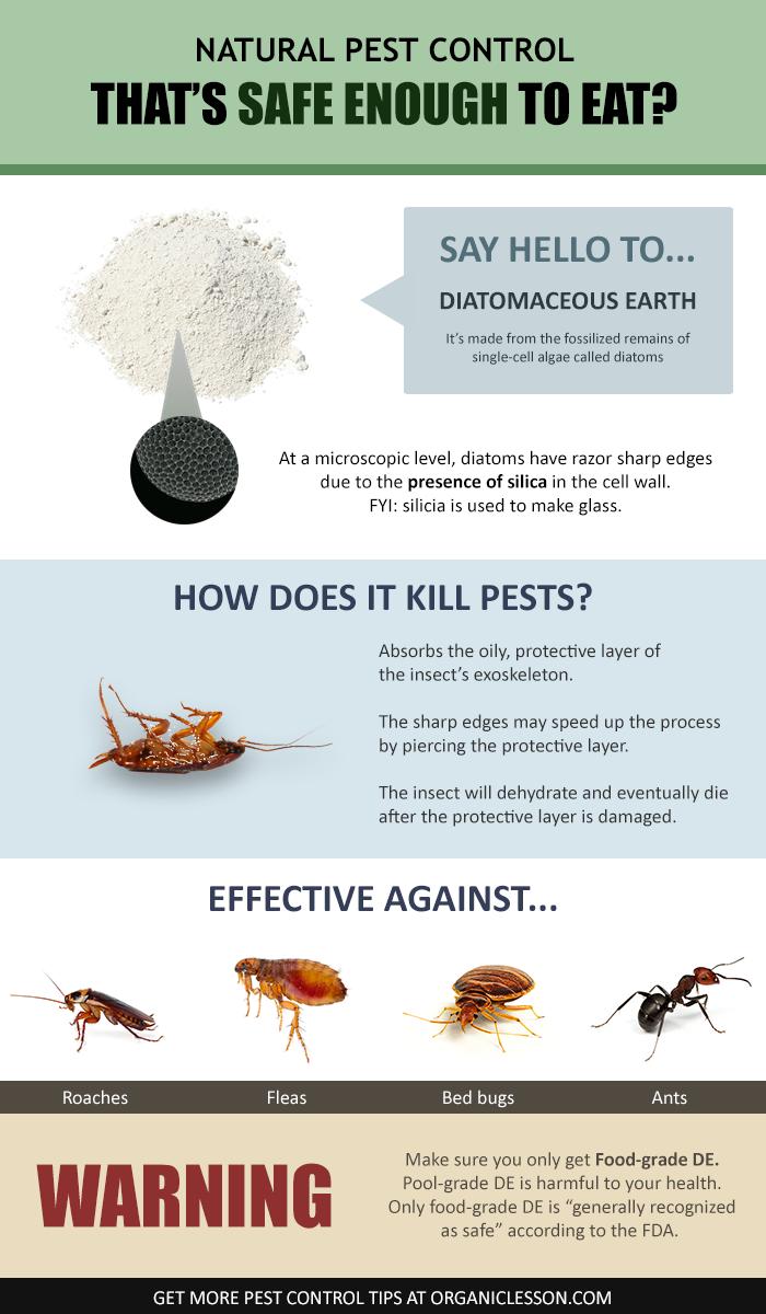 Diatomaceous Earth Food Grade Benefits & Uses incl. Pest