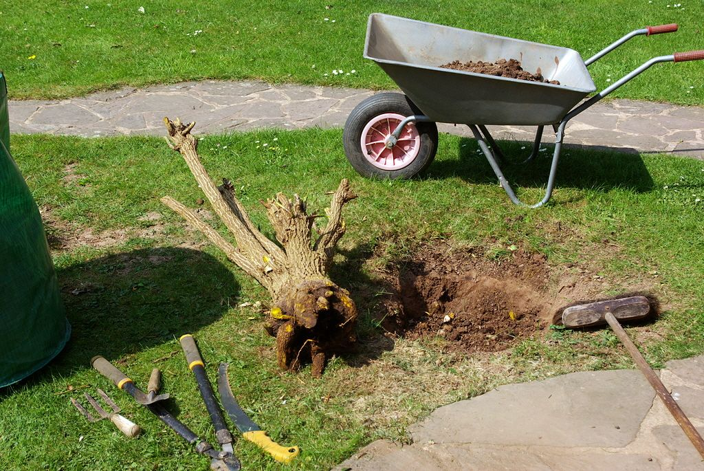 Tips To Get Rid Of a Tree Stump