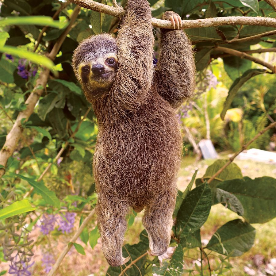 757d6bfa91de 😍Let s save the sloths!😊Every purchase funds the protection and  conservation of sloths.❤ 🌎Together we can make a difference!  savethesloths