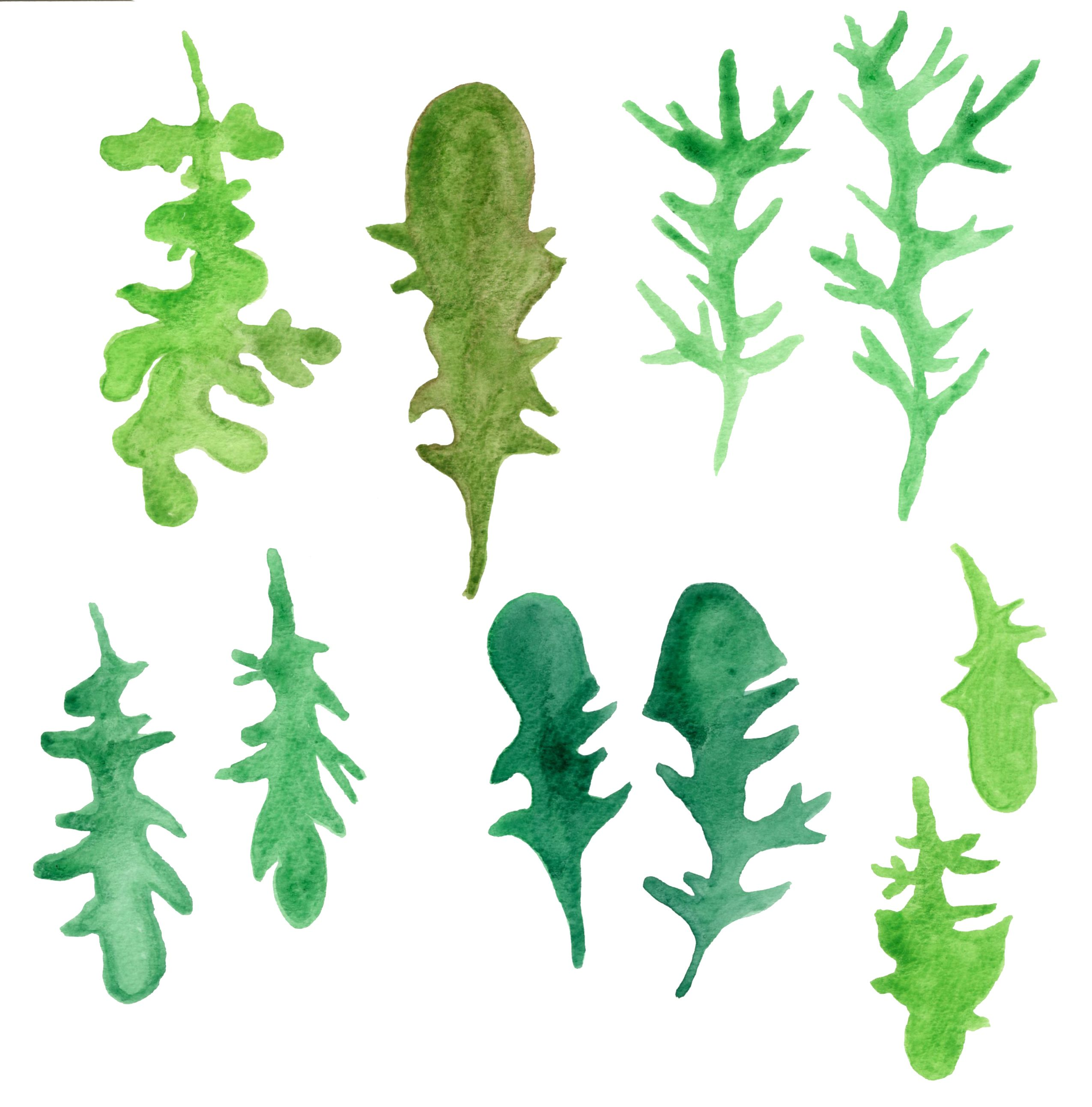 arugulas | Illustrating Foragers | Pinterest | Project ideas and ...