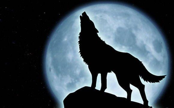 Silueta Lobo: Lobos Aullando - Buscar Con Google