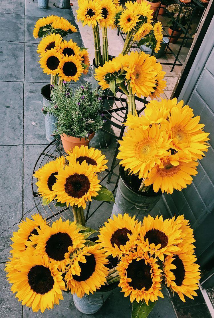 Pinterest Iceicedcoffee Yellow Flowers Beautiful Flowers Flowers