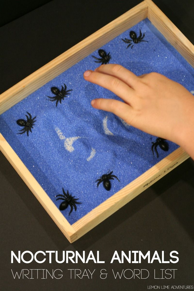 Nocturnal Animals Writing Tray