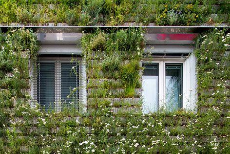 Der Garten Auf Der Hausmauer News Orf At Backsteinbau Fassade Fassadenbegrunung