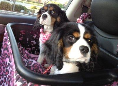 The Games Factory 2   Dog car seats, Dog car and Dog
