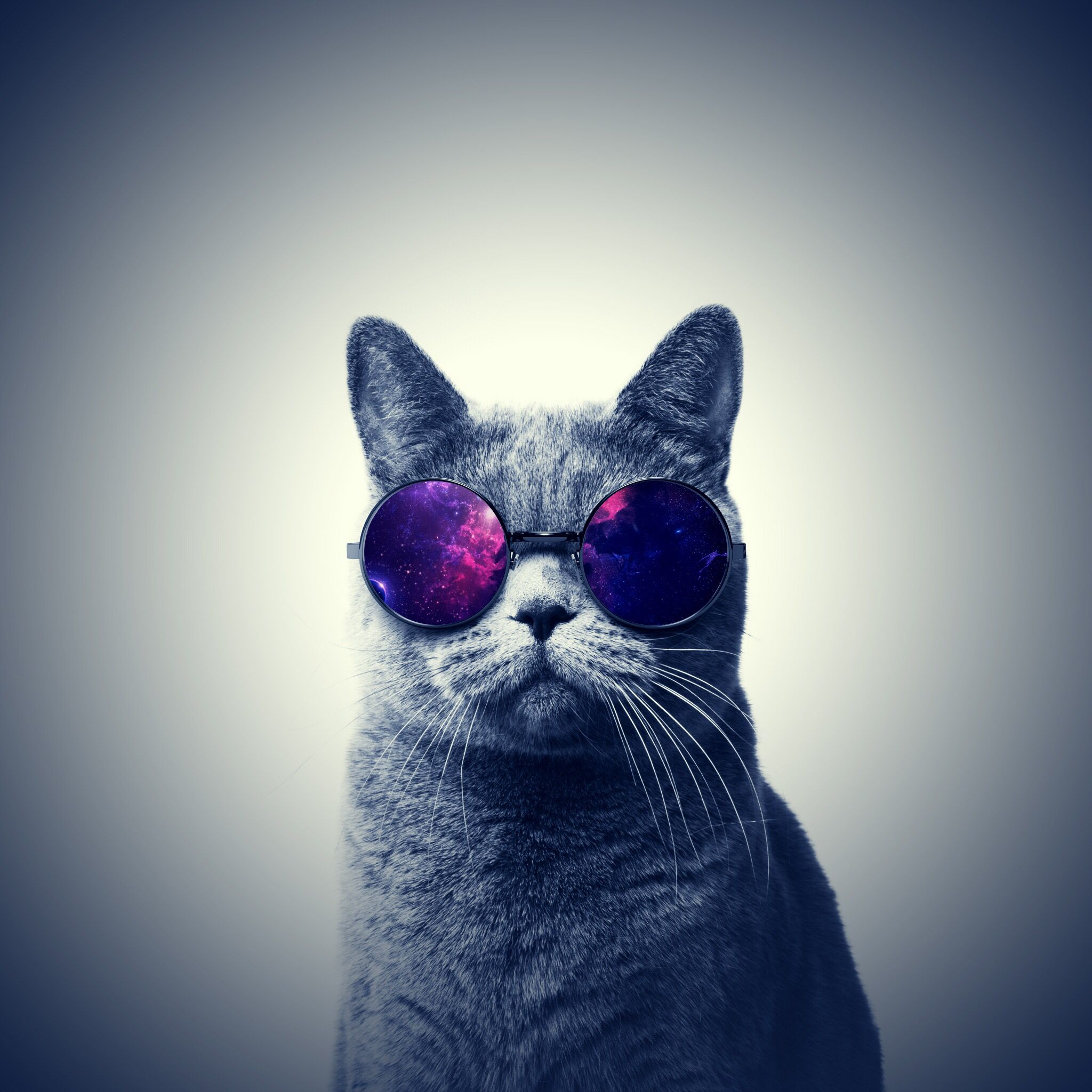 Cat Wallpapers For Iphone: Hipster Wallpaper, Iphone 6