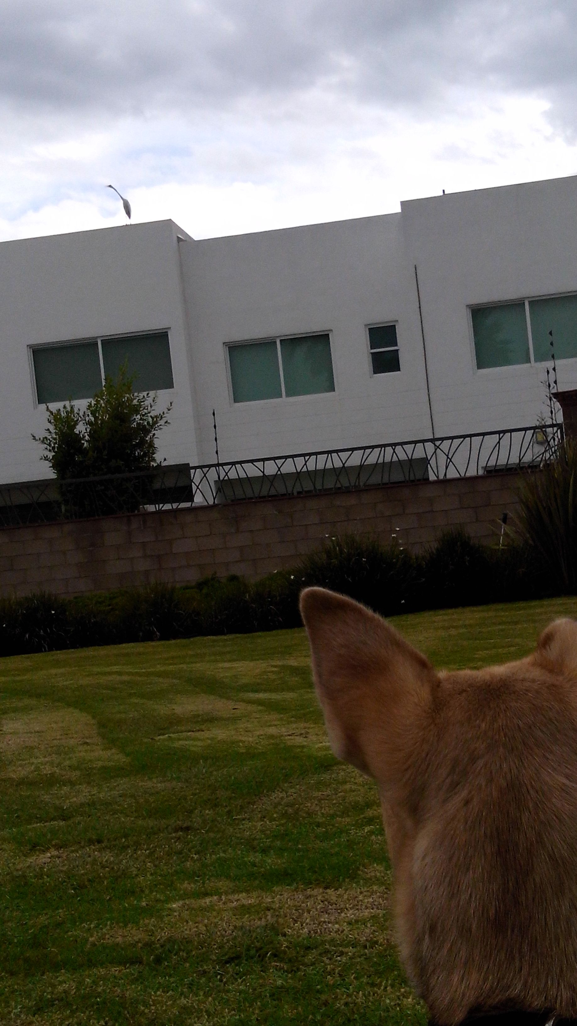 Habt Ihr Sowas Schon Gesehen Ein Riesiger Vogel Sitzt Einfach Auf Dem Dach Und Ruft Mir Was Zu Als Aufmerksamer Hund Muss Man Da Naturlich Zuhoren Lan Hunde