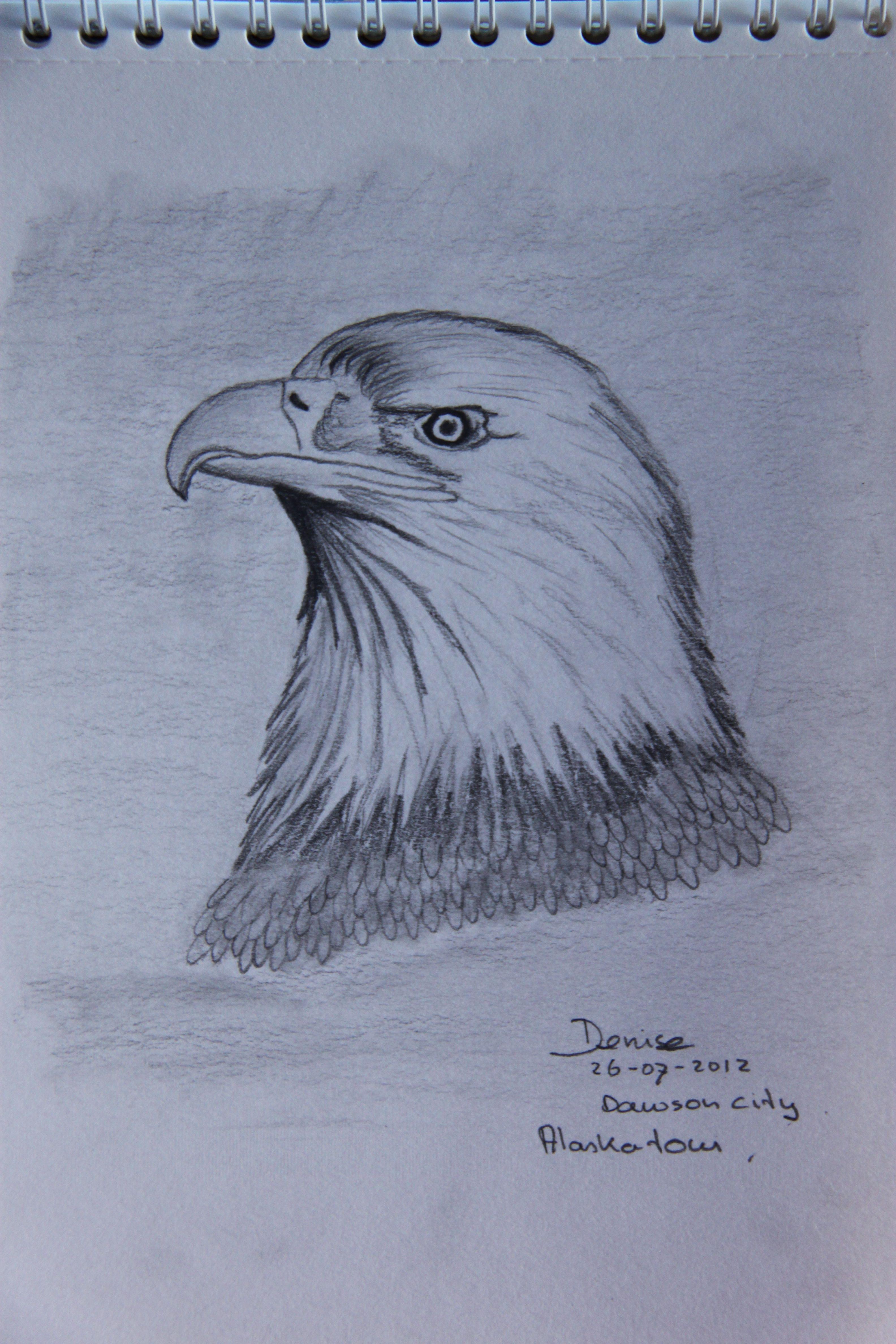 Visarend Potlood Bird Drawings Bird Sketch Drawings