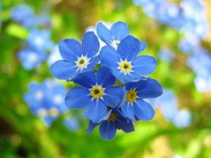 En febrero también florecen preciosas plantas... descubre aquí las más…
