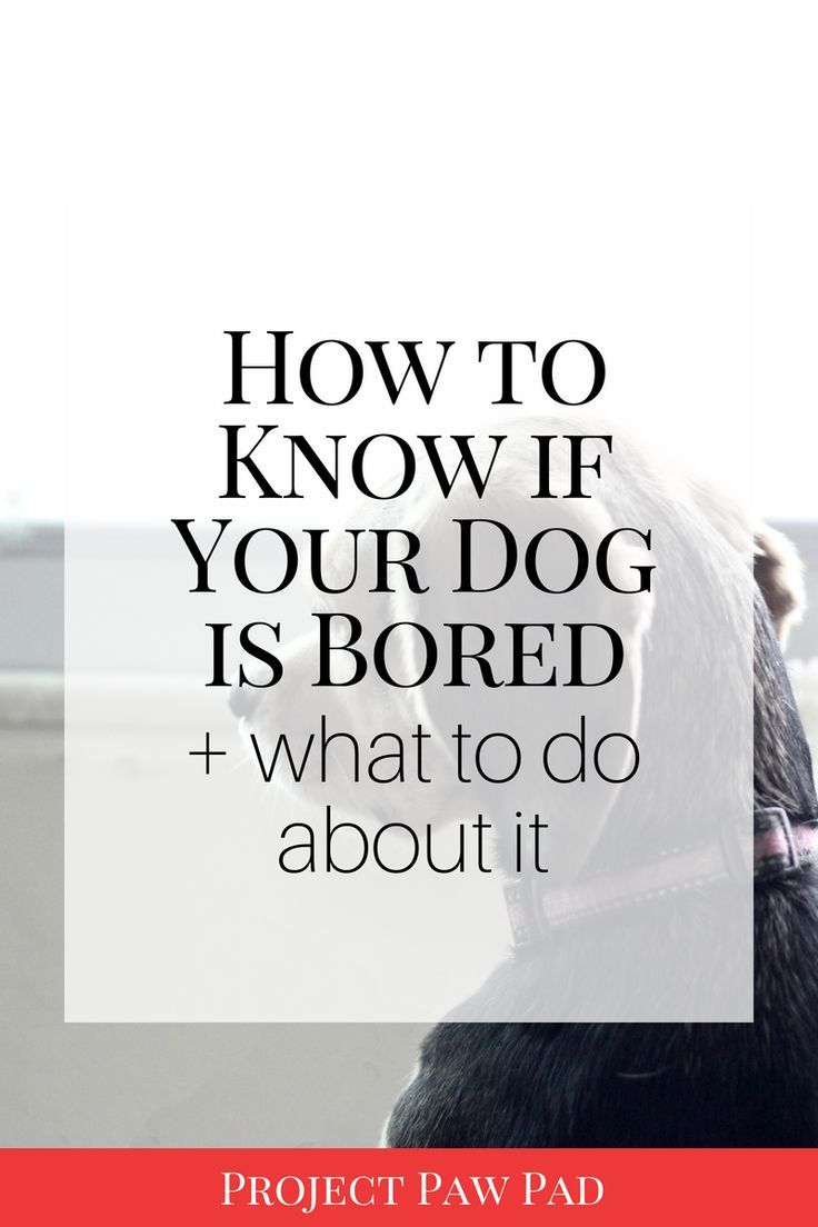 How to Know if Your Dog is Bored & What to Do About it