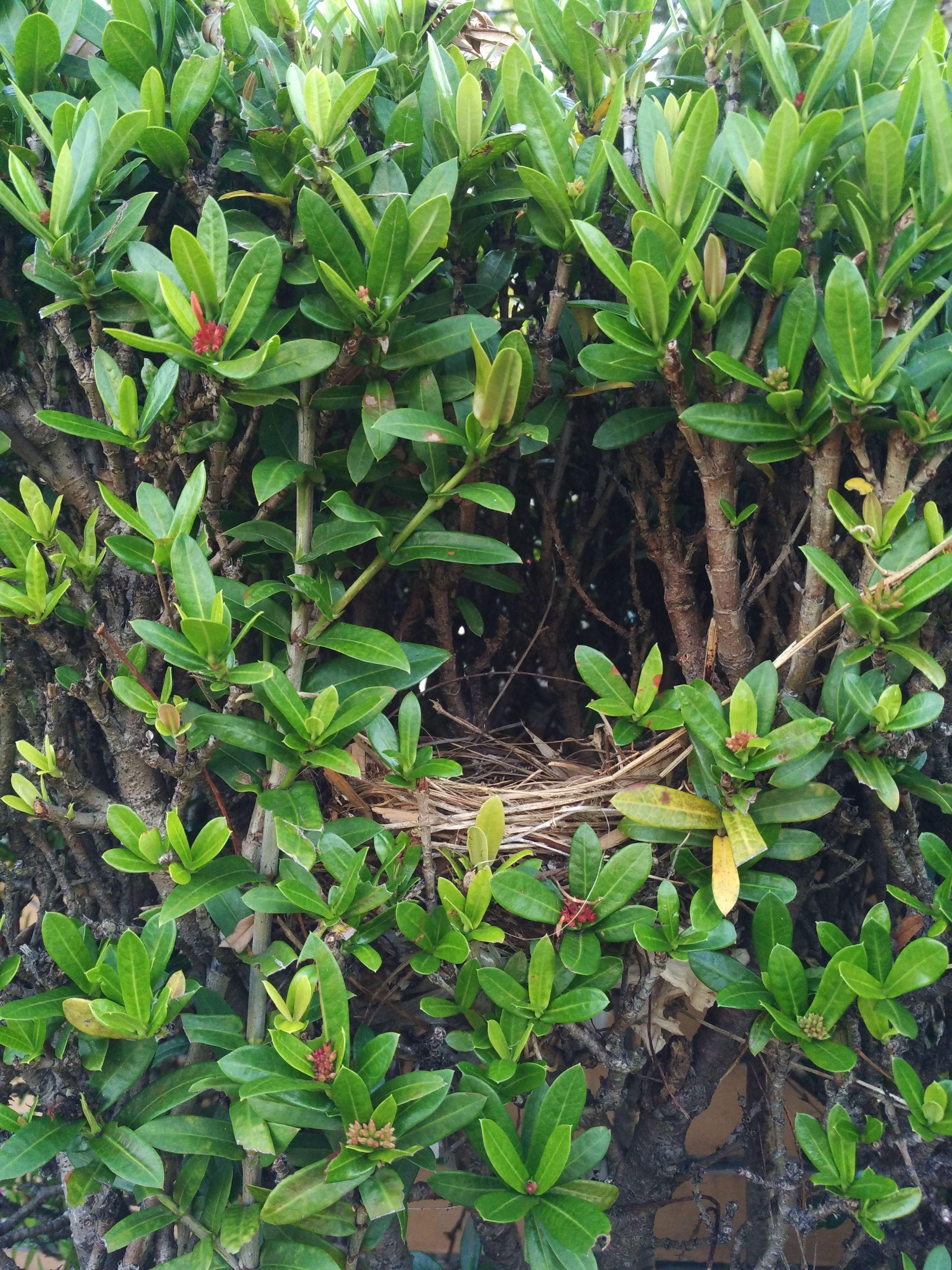 Found this tiny bird nest near the letter box tiny bird