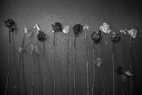 black-and-white-death-flowers-photo-photography-Favim.com-225935.jpg (500×333)
