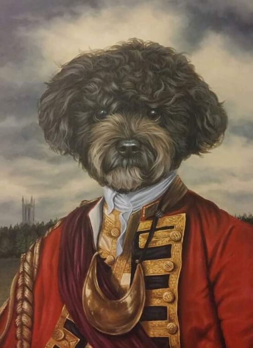 My dog in the style of Thierry Poncelet. By my good friend nick...