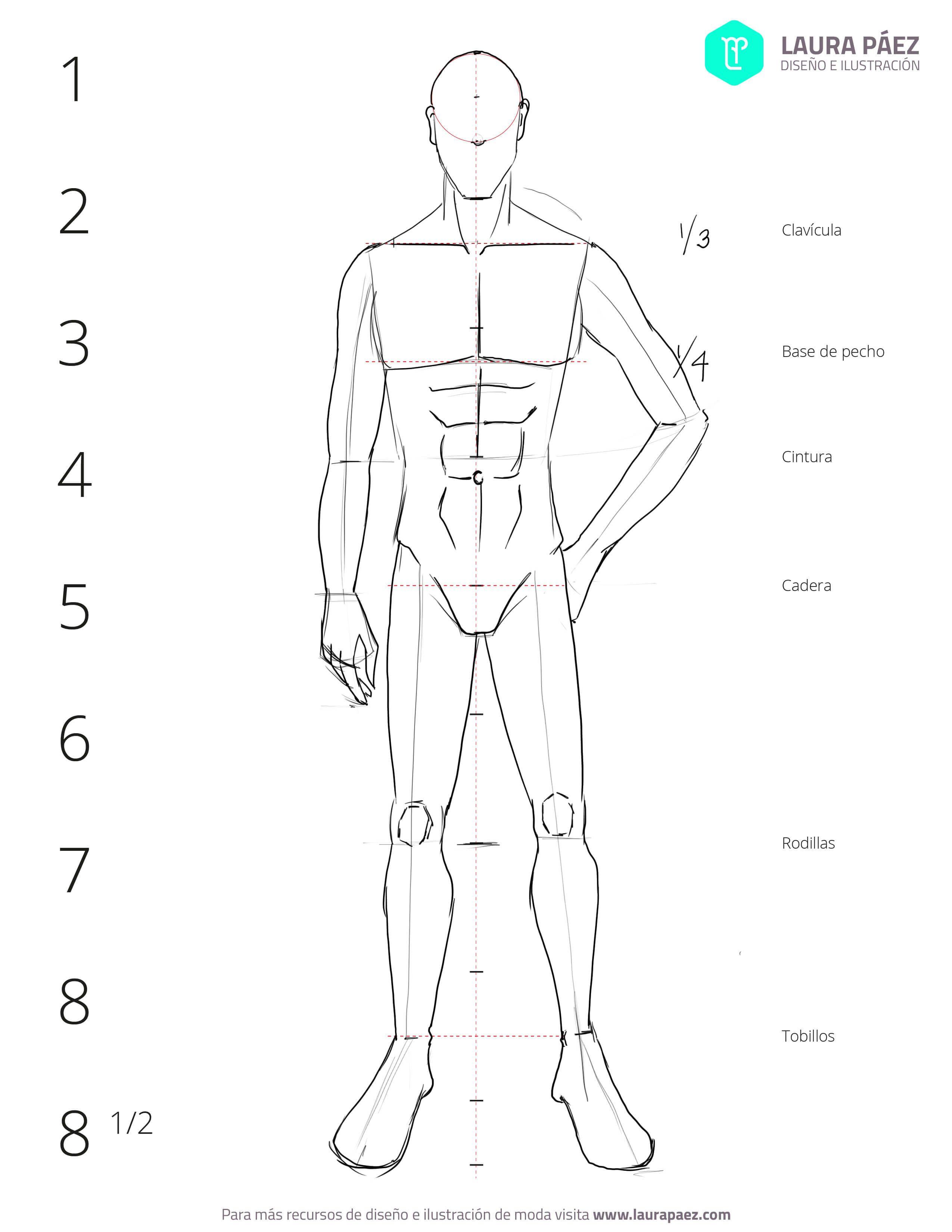 Cómo dibujar un figurín masculino: proporciones | Cómo dibujar ...