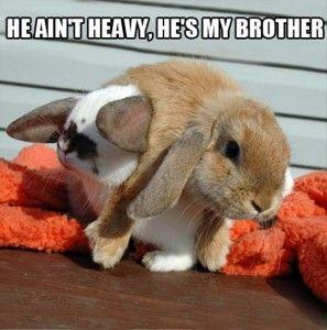 the funny bunny . Quedate con el que te cuide asi cuando ya estes bien borracha