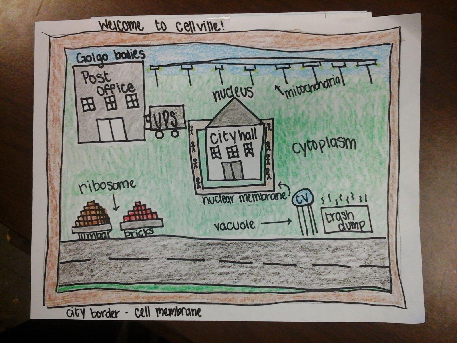 Cell city analogy essay