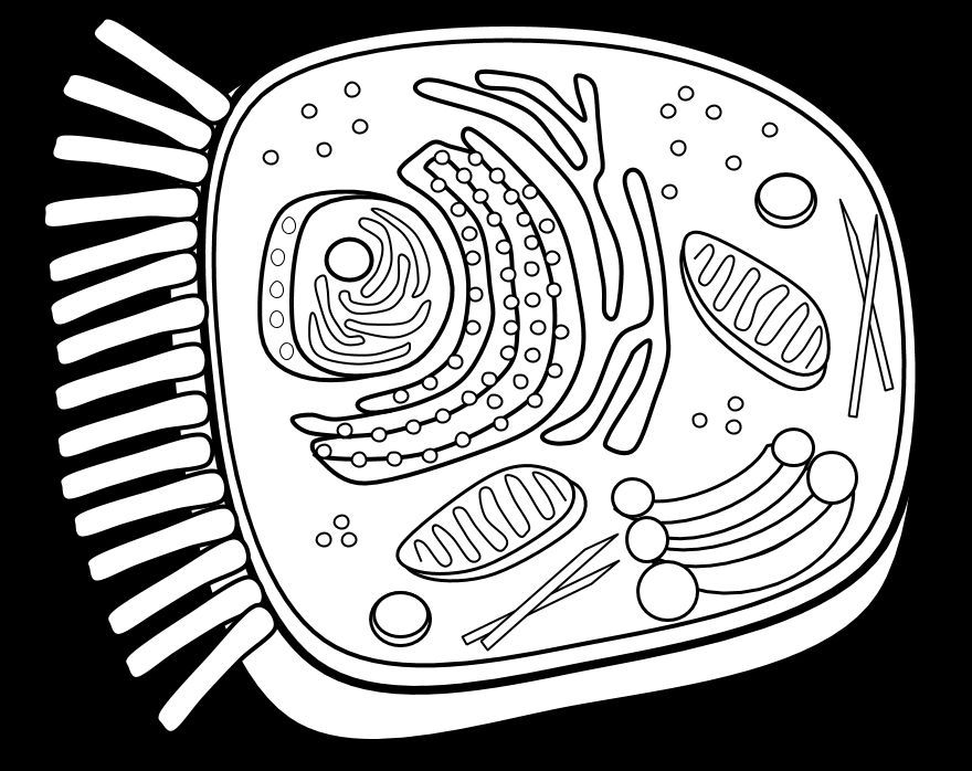 The Best animal cell coloring sheet - http://coloring.alifiah.biz ...