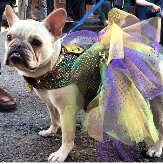 Mardi gras tutu- dog costume : mardi gras costumes for dogs  - Germanpascual.Com