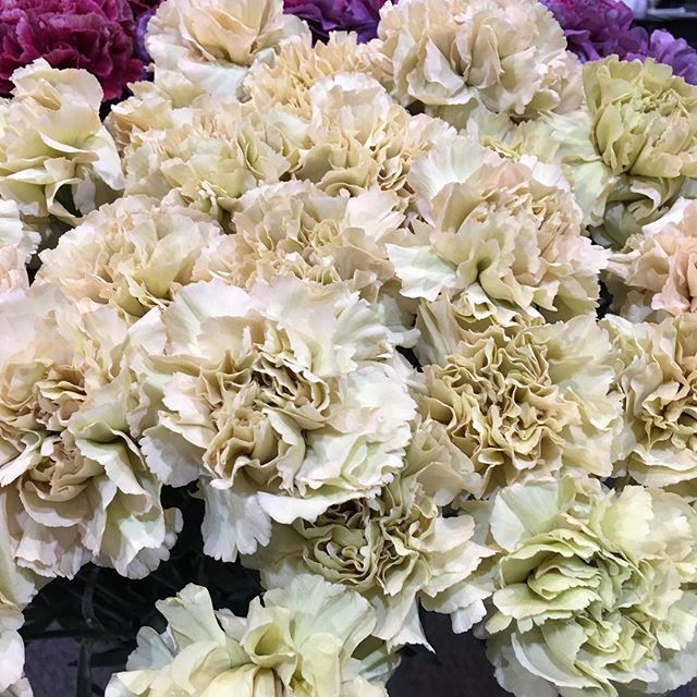 What Do Y All Think Of This Latte Colored Carnation Wfe2017 Carnationsflowers Passionateaboutflowers Floralde Flower Supplies Carnation Colors Carnations