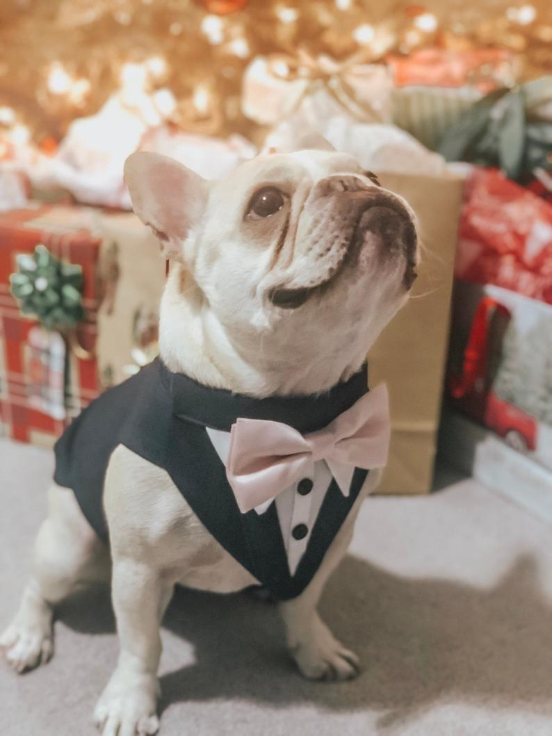 Charcoal Gray Dog Wedding Tuxedo Dog Wedding Attire Dog Etsy In 2020 Dog Wedding Attire Dog Wedding Outfits Dog Wedding