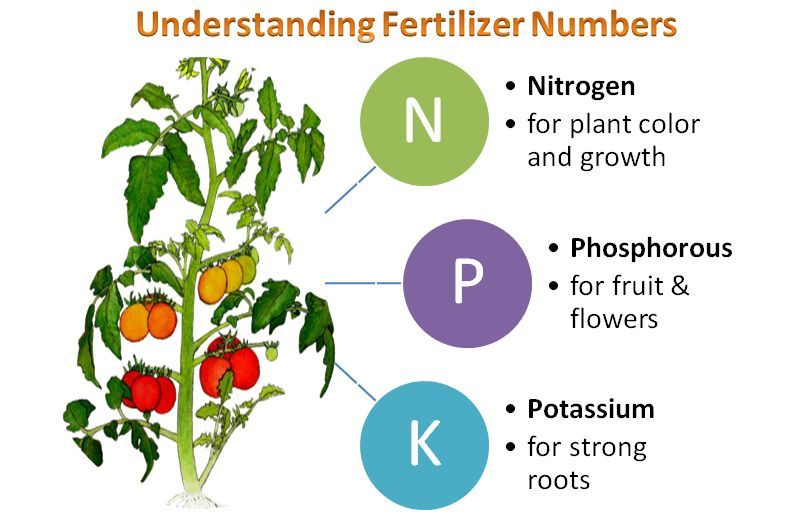 Fertilizer For Vegetable Garden Tomatoes