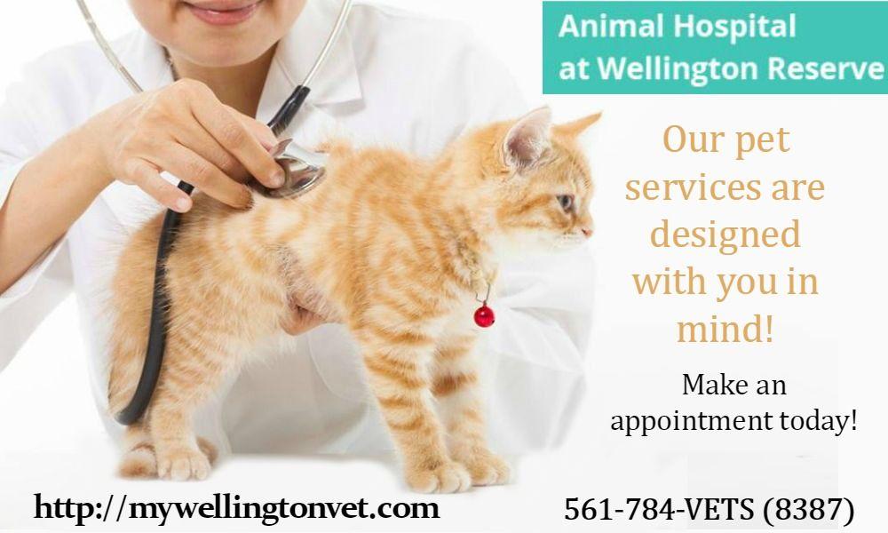 Luxury Pet boarding wellington Cat ailments, Cat