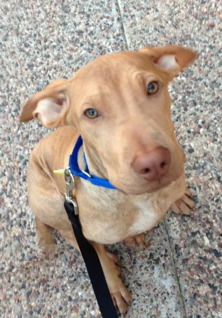 Jace 7 Month Old Shar Pei Mix Is The Petsmart Charities Abc15 Arizona Petoftheweek Adopt Today Fur Babies 7 Month Olds Animals