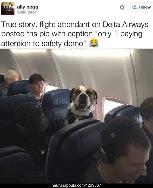 Tunnollinen matkustaja :3 - hauskat kuvat - Naurunappula