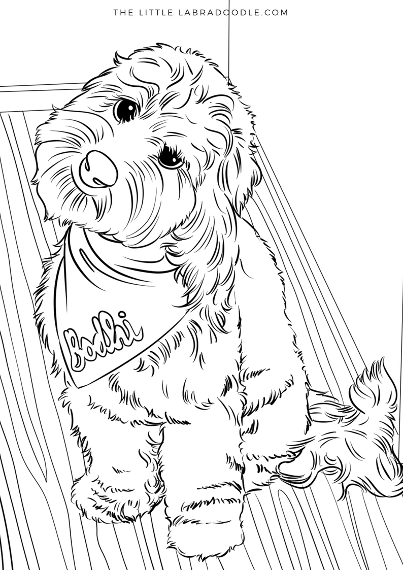 Doodle Lovers Coloring Book Brodie The Therapy Dog Dog Coloring Book Dog Sketch Coloring Books