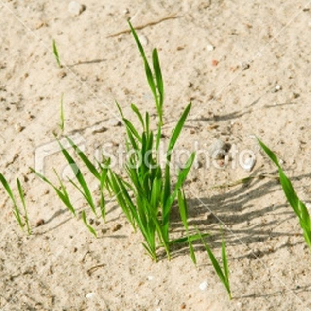 What Grass Grows Best In Sand Ehow Growing Grass Healthy Grass Lawns Sandy Soil