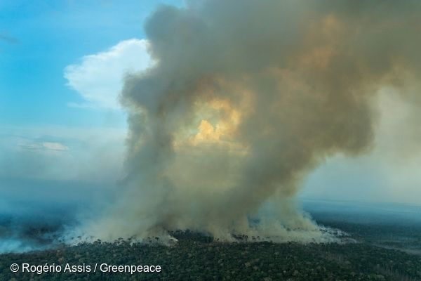 5 Alarming Facts About Amazon Forest Fires Amazon Environmental
