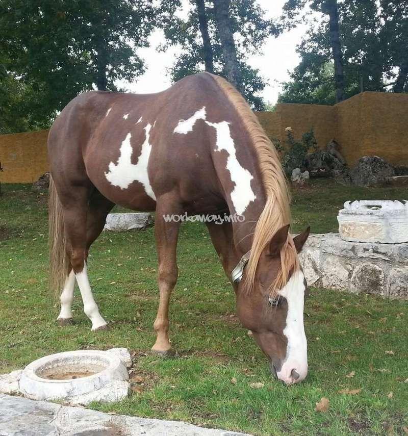 Pretty Liver Chestnut Paint Horses Pinterest Horses