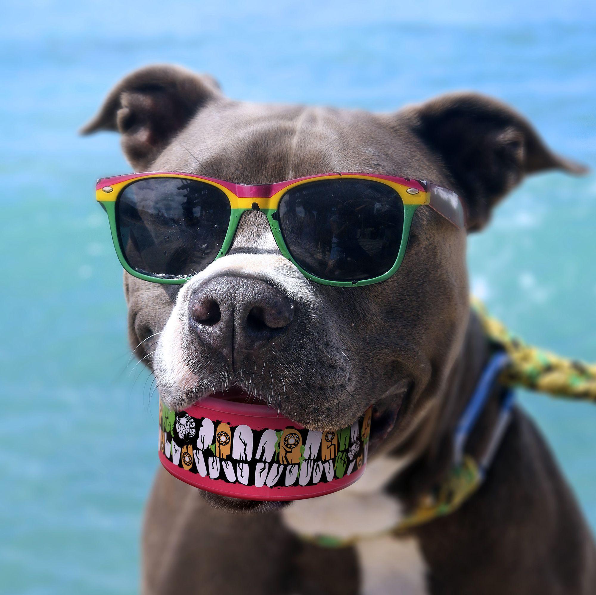 BIG GRILLZ Walking Dawg style Dawg Grillz Dog Toys