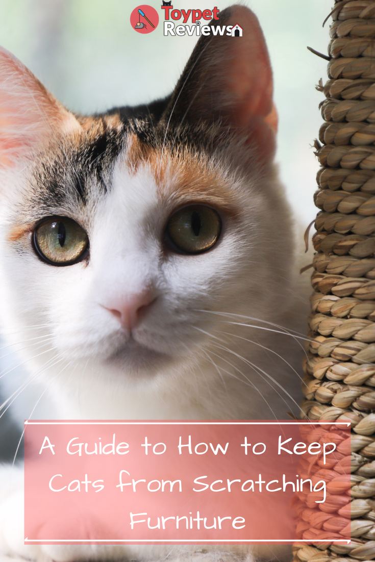 How To Keep Cats From Scratching Furniture Guide Faq Tabby Cat Cats Cat Aesthetic