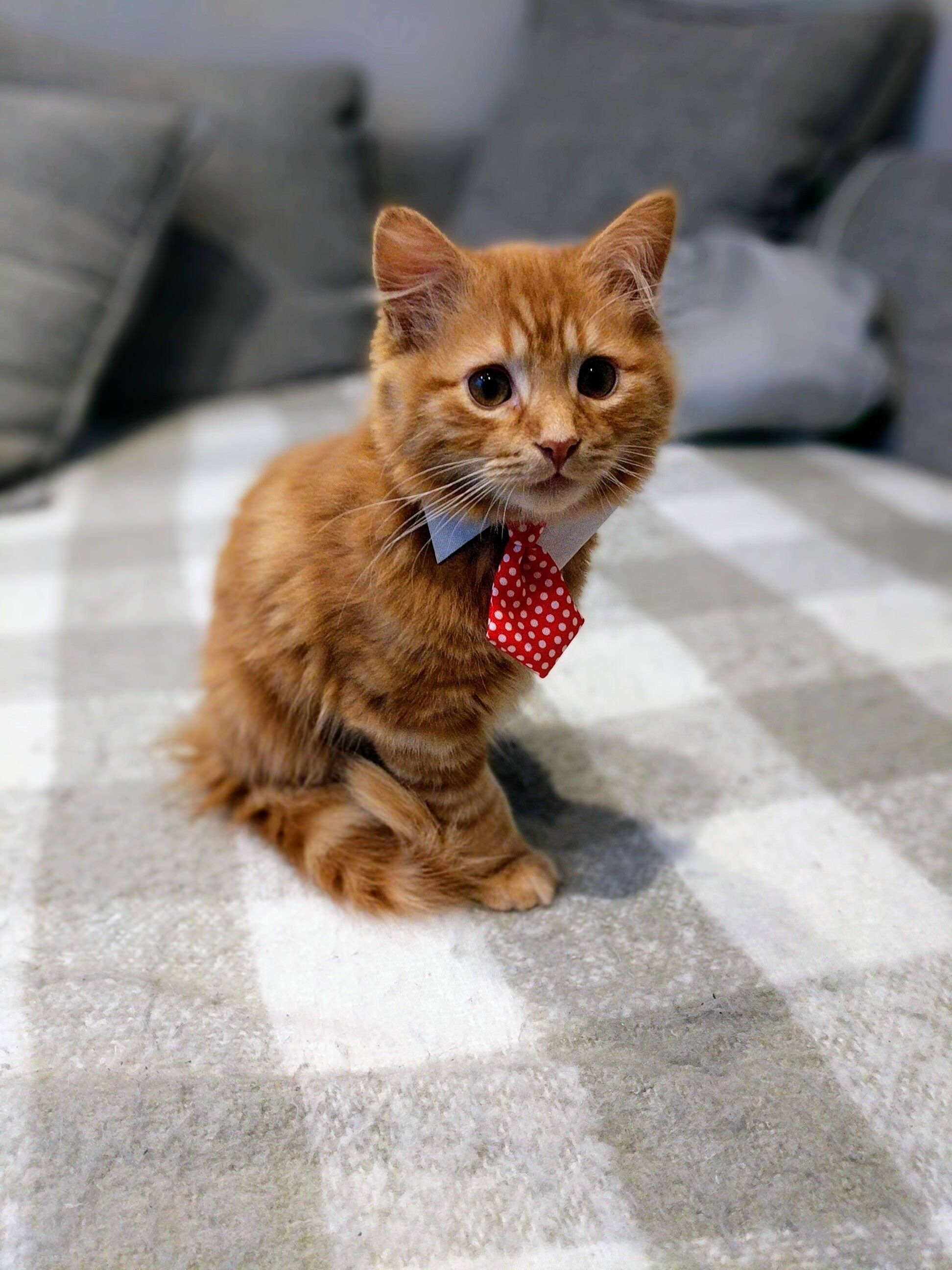 Pin By Emma Zanaboni On Animals Kittens Cutest Pretty Cats Cute Animals