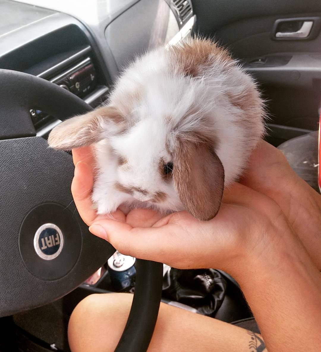 aqui levamos os feriados mto a sério.. kkk Feliz Páscoa a todos  #easter #rabbit by jacobmusicofficial