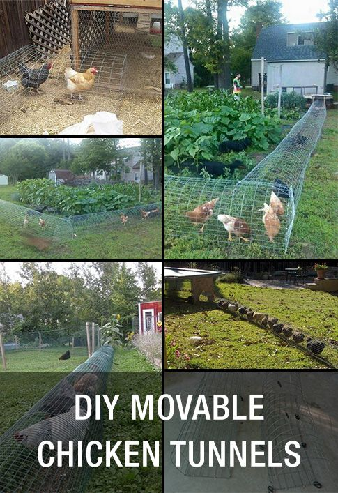 Diy movable chicken tunnels for Diy movable chicken coop