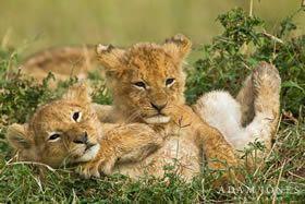 Africa Photo Safari | Kenya Masai Mara Photo Safari