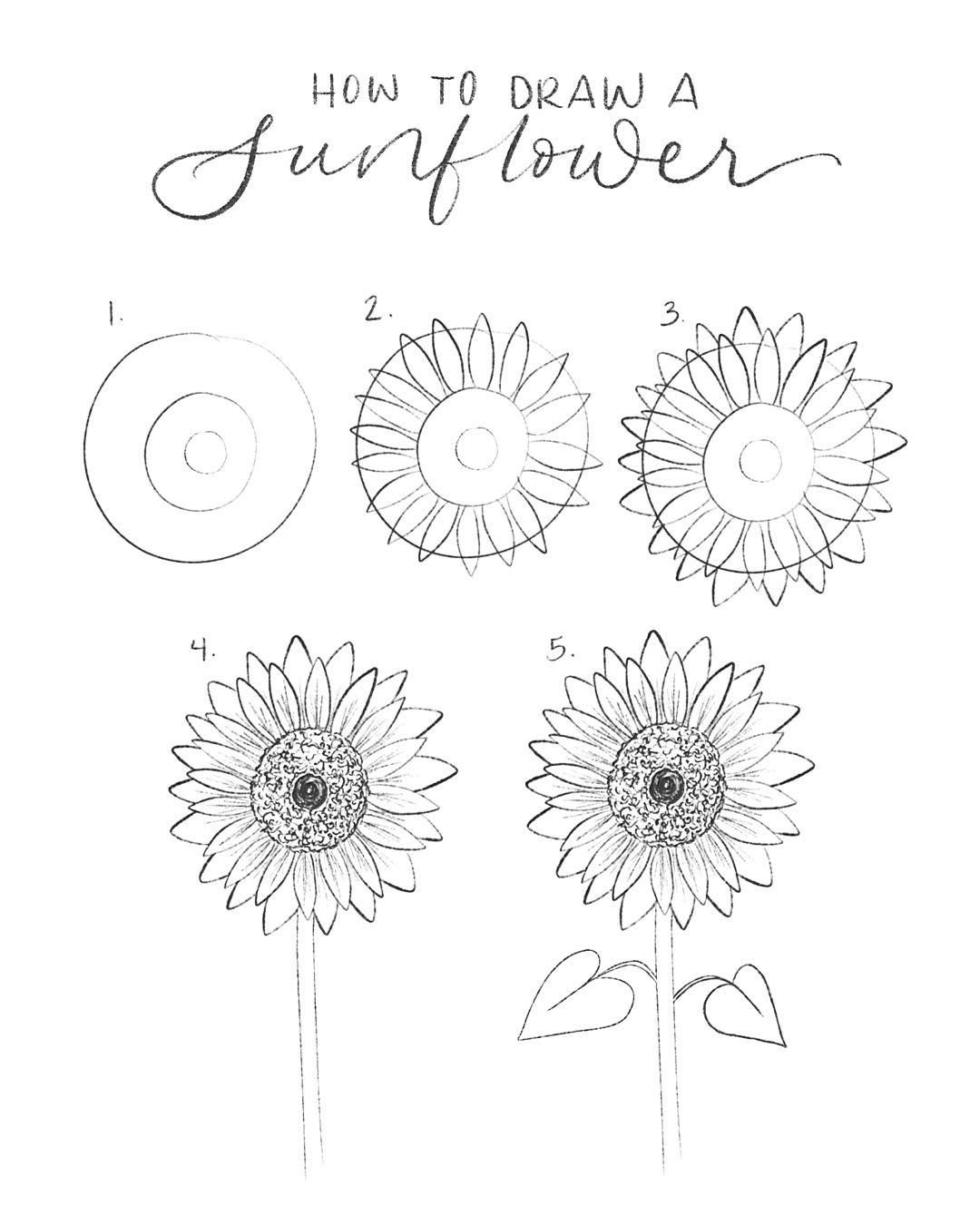"Kansas McGraw on Instagram: ""How to draw a sunflower in 5 easy steps:  1. Draw 3 circles starting with a large, then a medium, then a small.  2. Draw one set of petals…"""