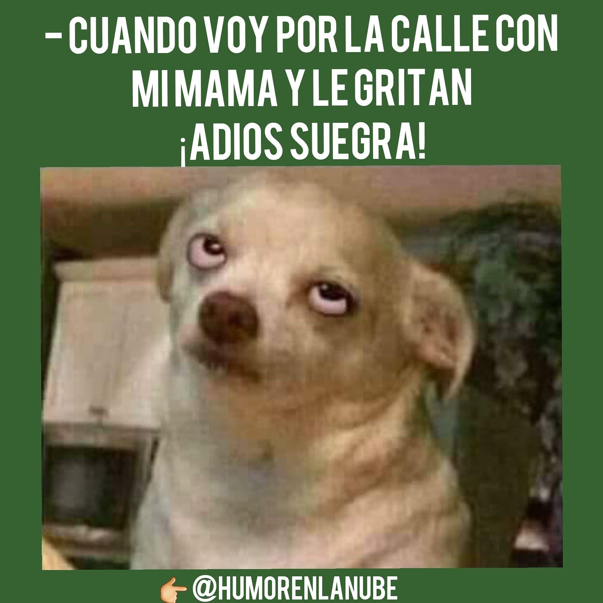 Descarga Este Meme Y Muchos Mas En Nuestra Web Humor Memes Momos Memesespanol Mascotas Memes Memes Perros Gracioso
