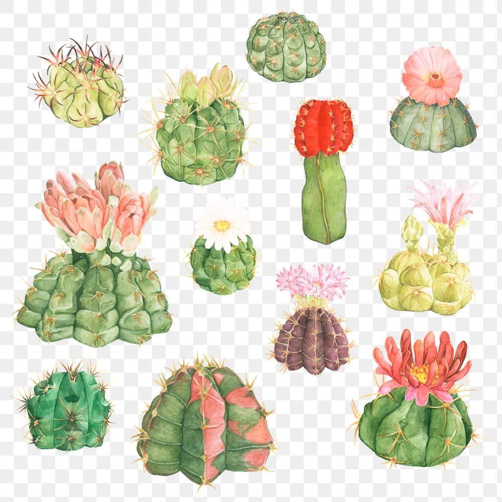 Download Premium Png Of Decorative Cactus Png Sticker Collection 2764253 Cactus Decor Cactus Flower Cactus