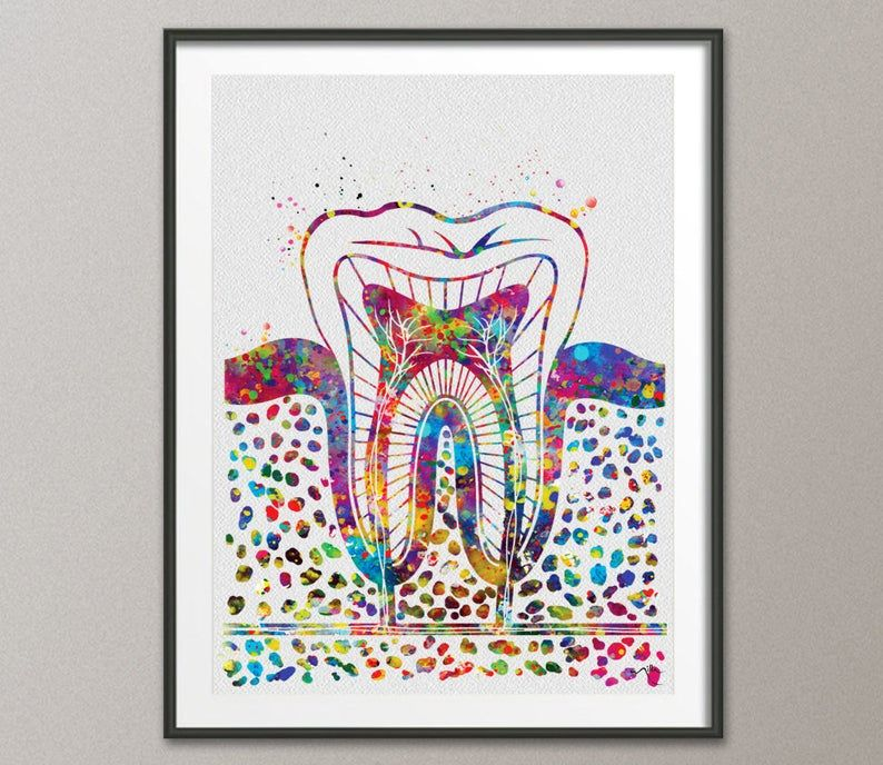 Tooth Anatomy Watercolor Print Teeth Anatomy Medical Art Dental Dentistry Decor